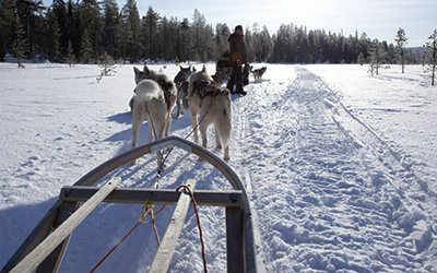 Husky safari in Olos, Finnish Lapland