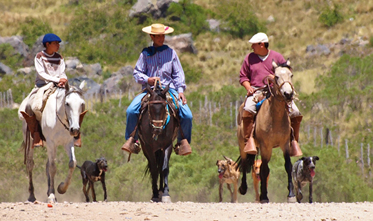 Three Gauchos ride horses towards in the camera in Argentina