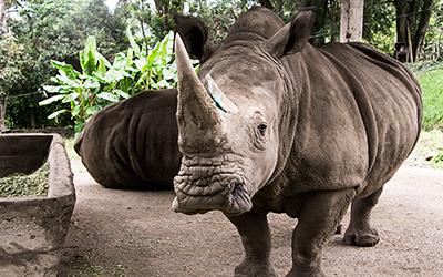 Rhino at Zoológico Matecaña de Pereira