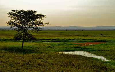 Photo of National Park in Mozambique