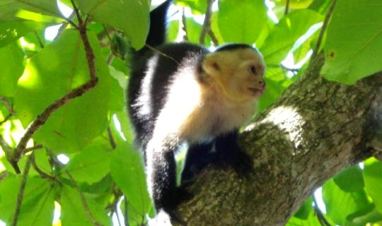 Wildlife Conservation Quest, Costa Rica