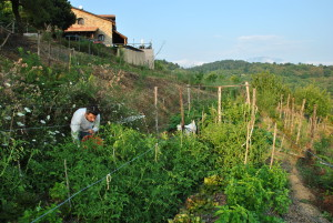 farming in Vibonati